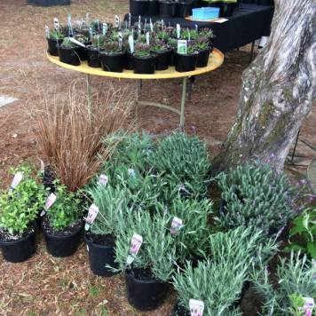 Woodside Plants 2