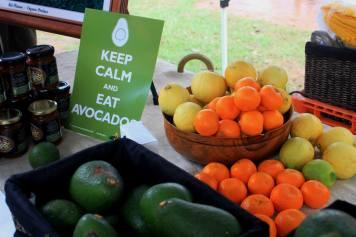 Comboyne Avocados 3