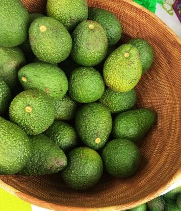 Comboyne Avocados 6